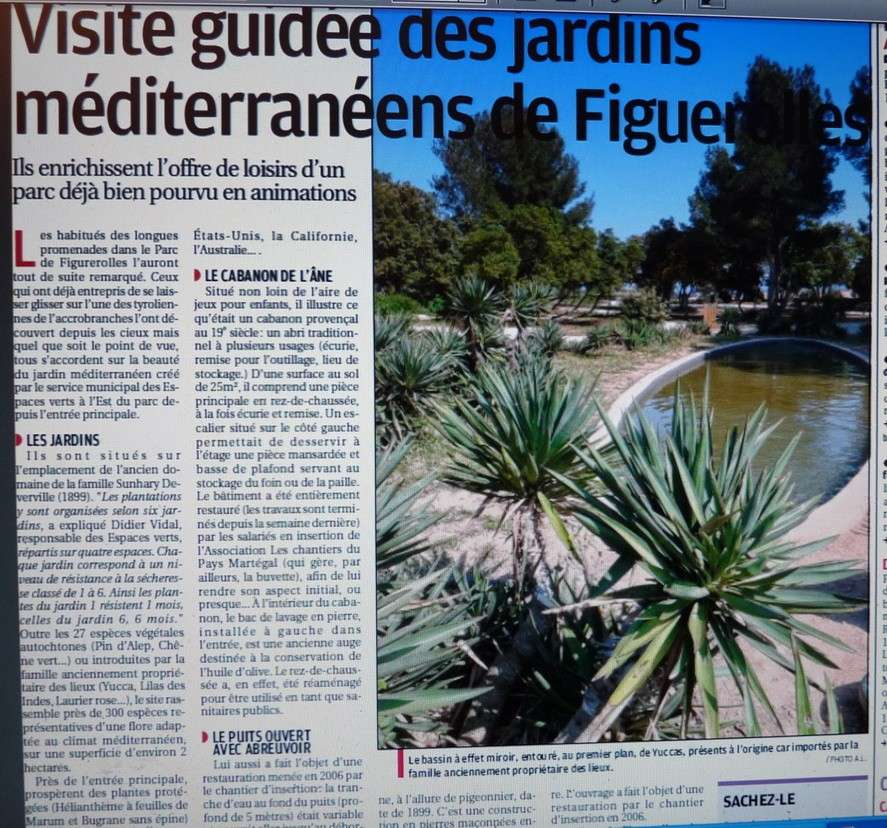 LA VEGETATION MEDITERRANEENNE - Page 6 P1280717