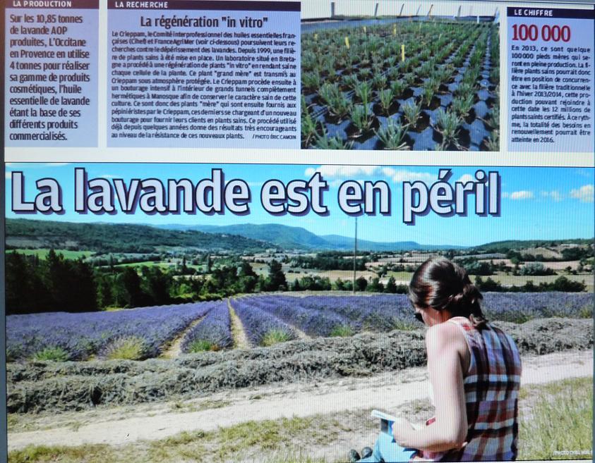 IL ETAIT UNE FOIS ..VALENSOLE - Page 3 P1280931