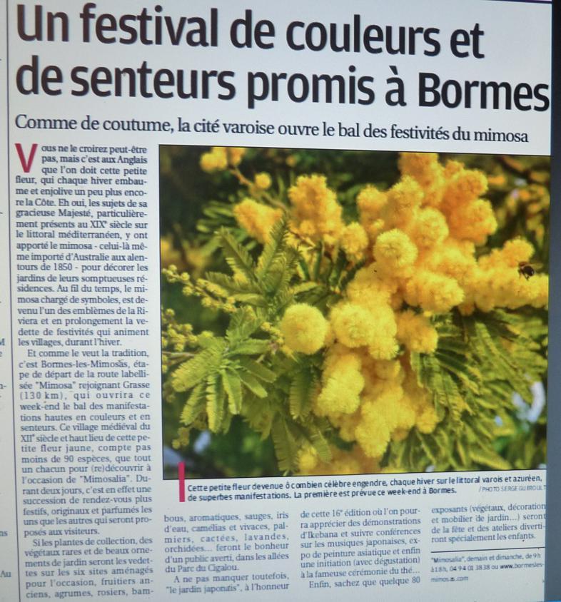 LA VEGETATION MEDITERRANEENNE - Page 6 Photo_19