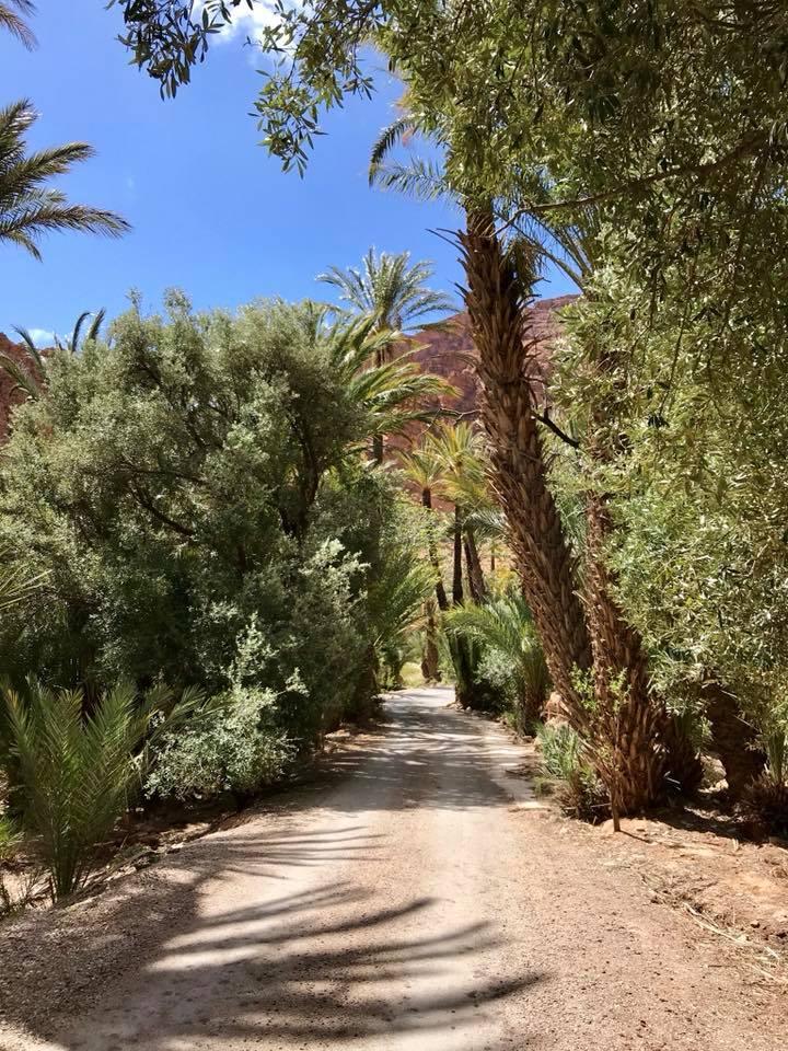 Le Maroc  : avril 2020 - Page 2 31344510