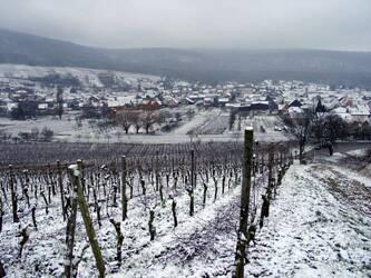 Les Vins d'ALSACE Bollen12
