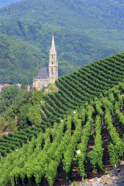 Les Vins d'ALSACE Rangen12