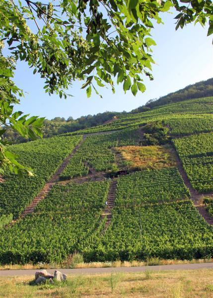 Les Vins d'ALSACE Rangen14