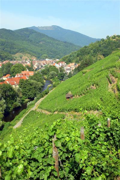 Les Vins d'ALSACE Rangen15