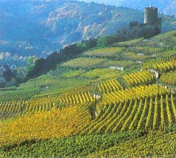 Les Vins d'ALSACE - Page 2 Weinba13
