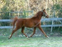 Martel, le petit nouveau qui rejoint la famille : Bebinus Caballus Equus - Page 2 Tof_ti10