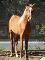 Martel, le petit nouveau qui rejoint la famille : Bebinus Caballus Equus - Page 2 Tof_ti11