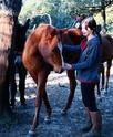Martel, le petit nouveau qui rejoint la famille : Bebinus Caballus Equus - Page 2 Vanill10