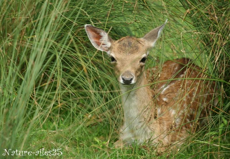 Bambi, je l'ai rencontré ! ... 2ème volet ... Wechio10