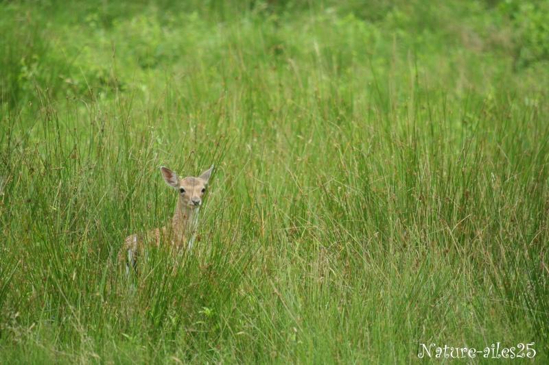 Bambi, je l'ai rencontré ! ... 2ème volet ... Wechio11