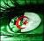 قسم الجزائر