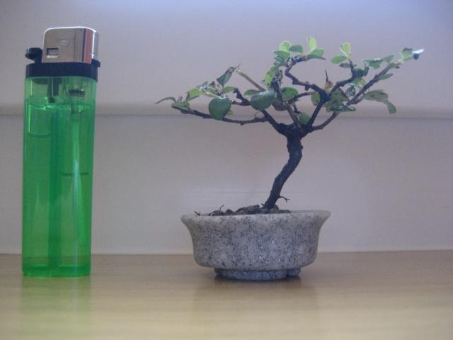 Mini bonsai Img_1913