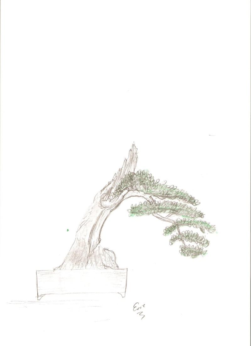 Vos idees pour la formation d'un olivier Dessin10