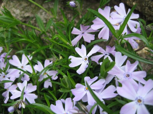 Thème du mois de Mai 'Le renouveau du printemps' Img_0033