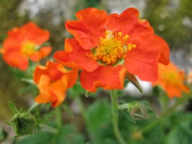 Thème du mois de Mai 'Le renouveau du printemps' Img_0034