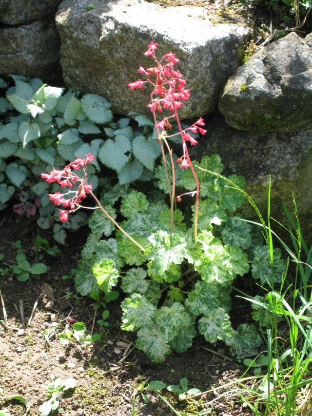 fleurs de marc et mario Img_0046