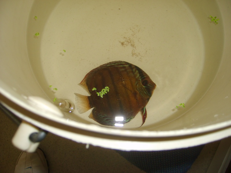 Mes Discus Sauvages S6007110