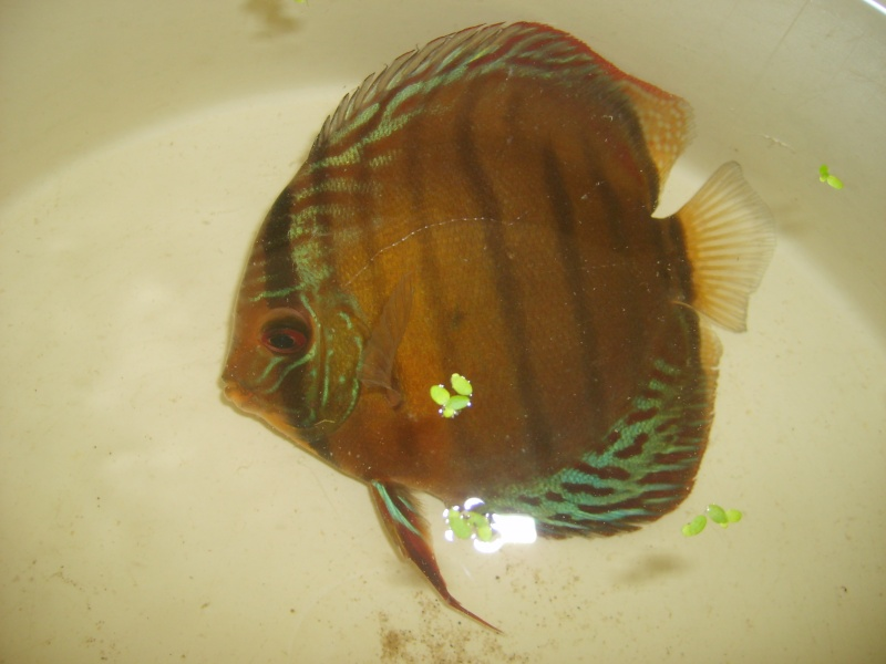 Mes Discus Sauvages S6007111
