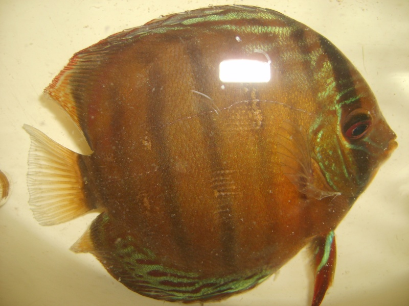 Mes Discus Sauvages S6007112