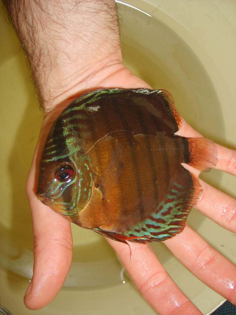 Mes Discus Sauvages S6007113