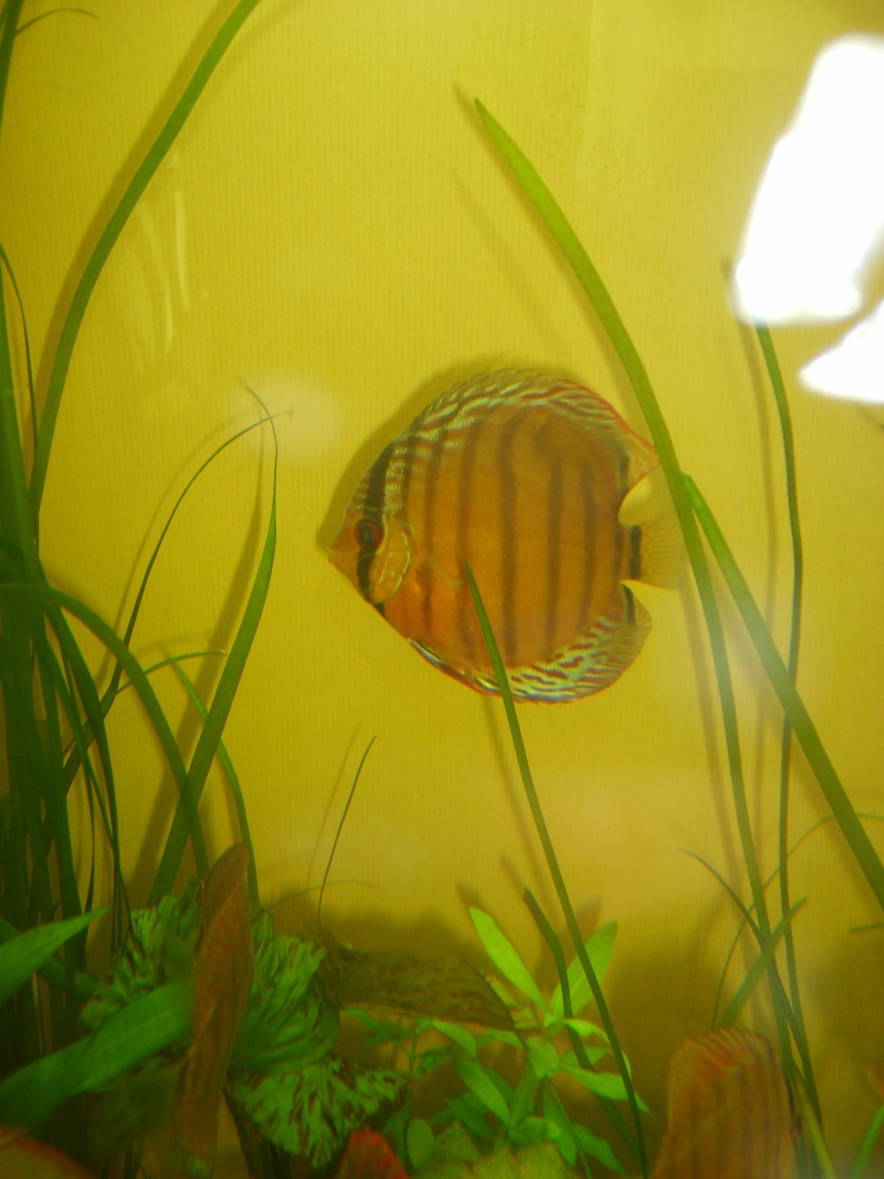 Mes Discus Sauvages S6007114