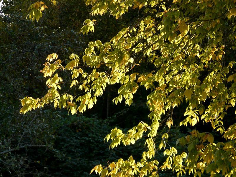 chemin sous les pins P1100812