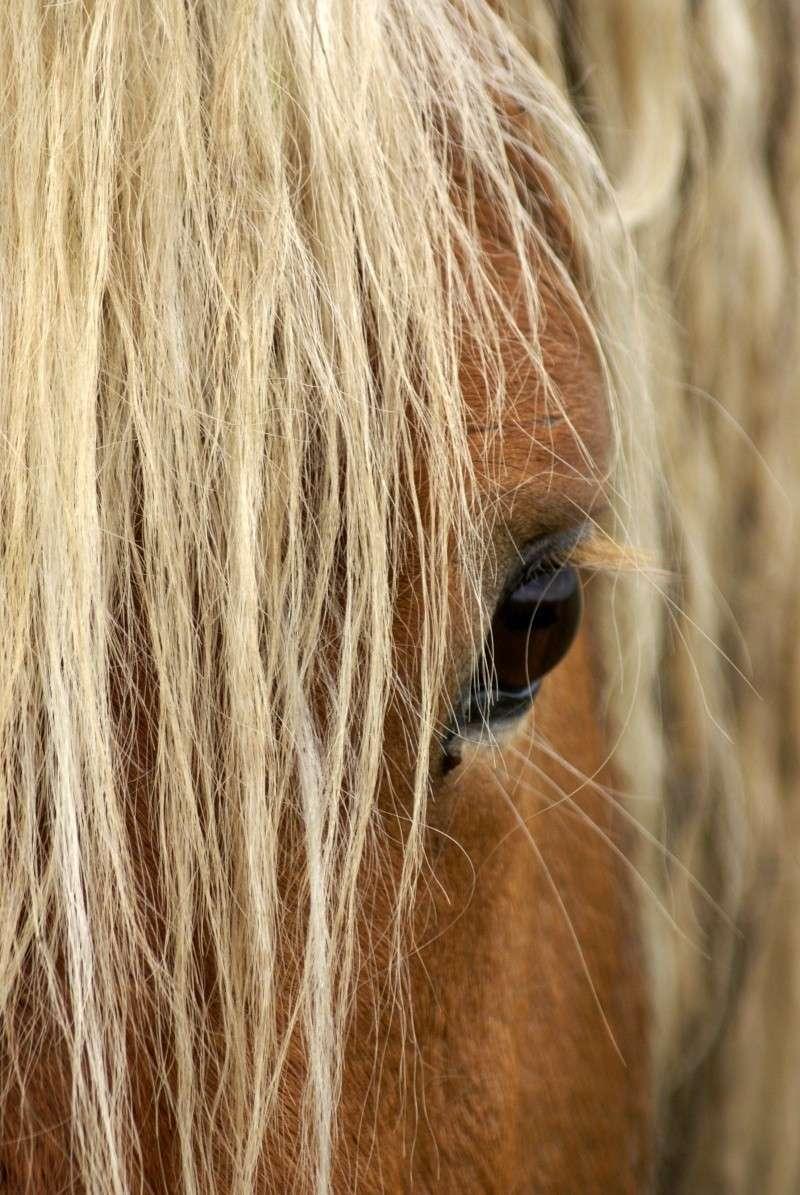 thème mai 2012: un bout de cheval !  - Page 3 Dsc05310