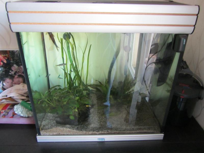 tapis de plantes  Img_0817