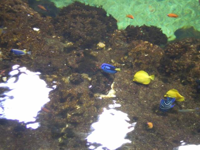 L'Aquarium Mare Nostrum de Montpellier Imgp0410