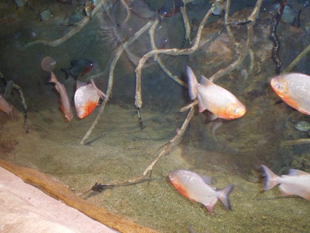 L'Aquarium Mare Nostrum de Montpellier Imgp0411