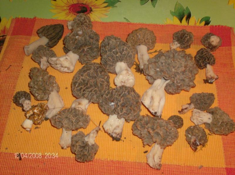 Rubrique mycologique Hpim0511