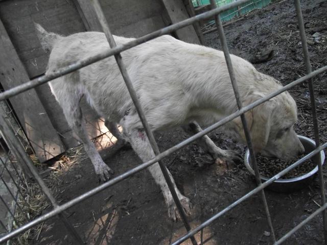 Sujet du message: Chiens à retirer en urgence d'un élevage!!!! (35) Dscf2010