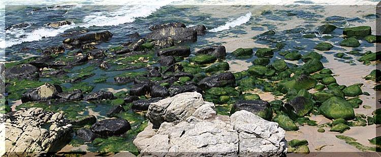 sur la plage 0124