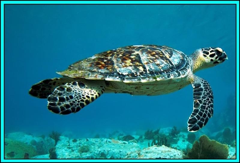 la tortue de bruno Tortue11