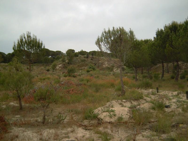 Fotos 8 de junio..comparativo woodland, flecktarn y multicam Pict0019