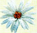 Брошки Flora014