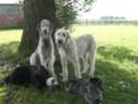"Fotos vom Gandenhof ""Tinas Rasselbande""! Hundis11"