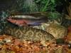 Aquarium Mayhem Mis_0310