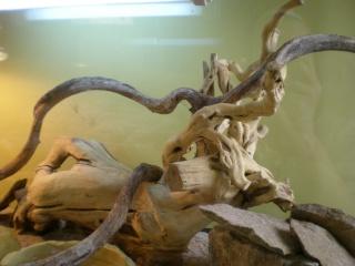 branche décorative Tout_l14