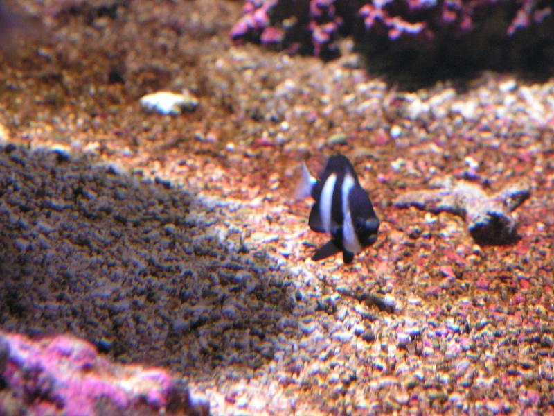 aquarium de vannes Pict0122