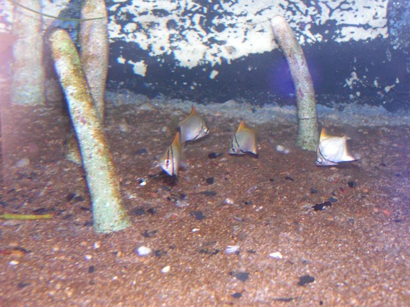 aquarium de vannes Pict0123