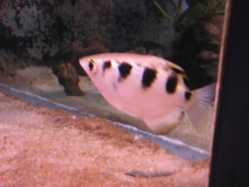 aquarium de vannes Pict0124
