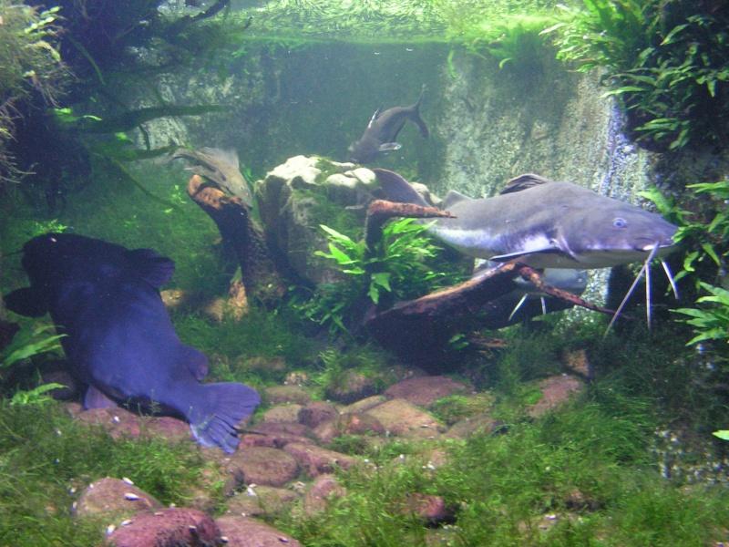 aquarium de vannes Pict0125