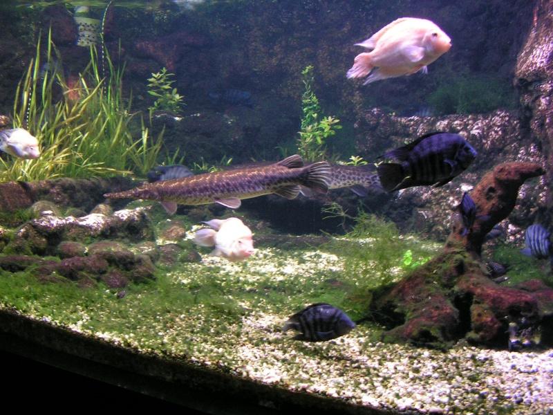 aquarium de vannes Pict0126