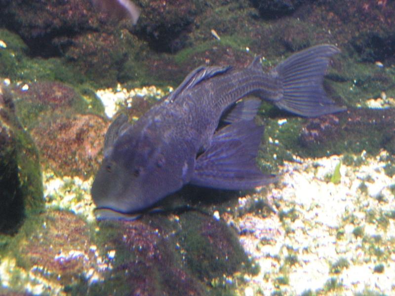 aquarium de vannes Pict0127