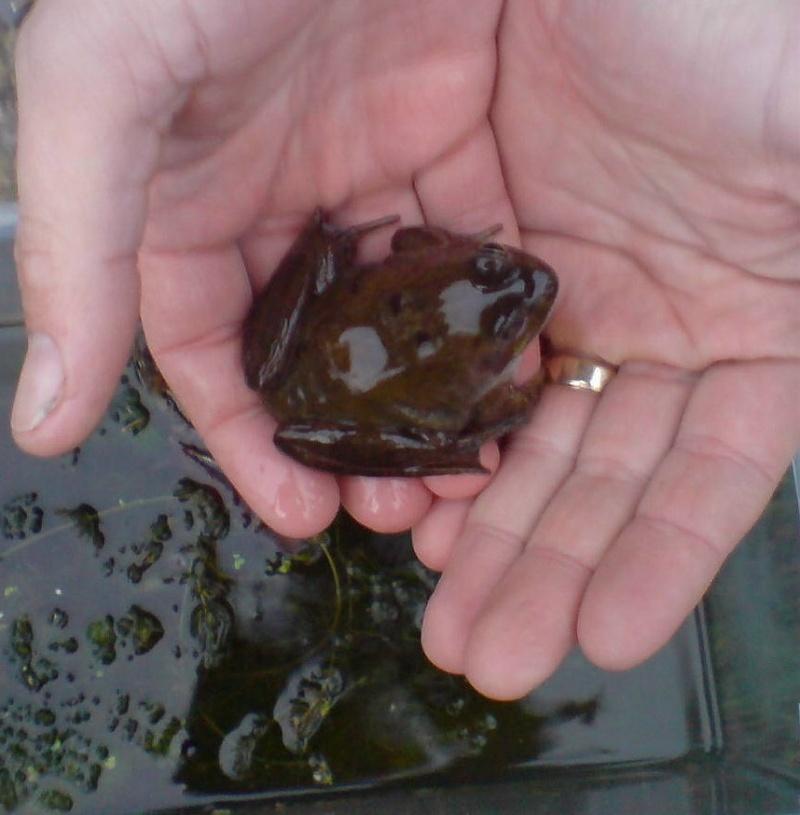 my find last week Frog11