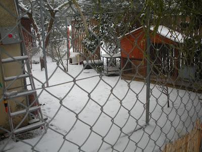SOS Familles d'Accueil ''grand froid'' Dscn5111