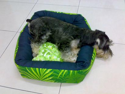 Share your furkid's bed and toy Mikibe10