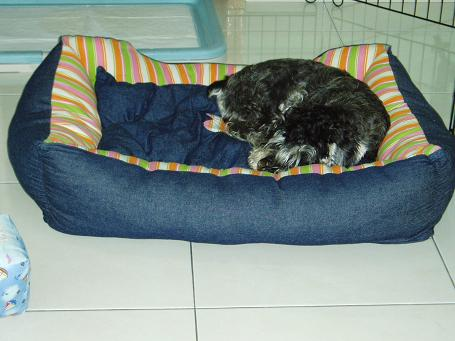 Share your furkid's bed and toy Mikibe13