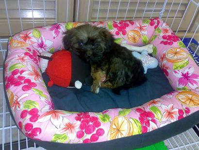 Share your furkid's bed and toy Sushib11